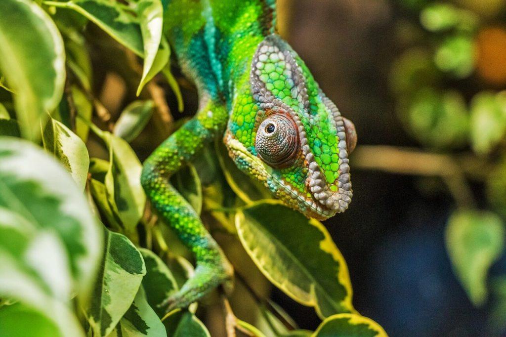 Nature & Wildlife Areas in  Madagascar
