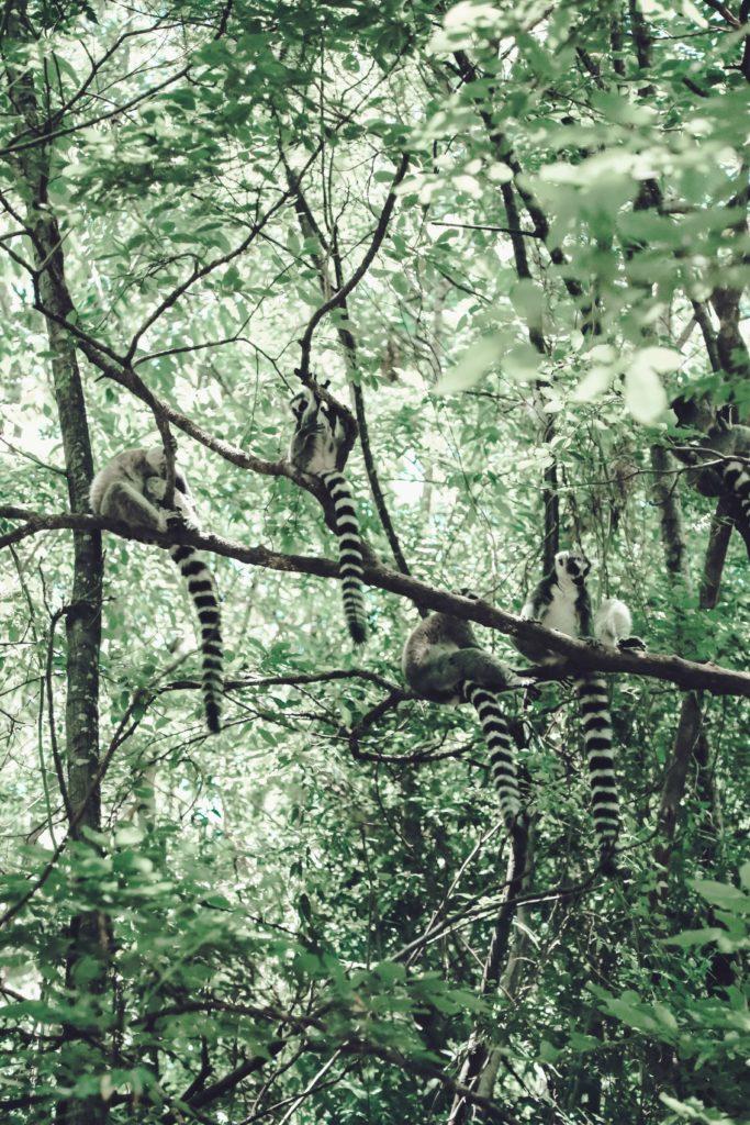 Madagascar Holidays and Travel Guide - Masoala National Park