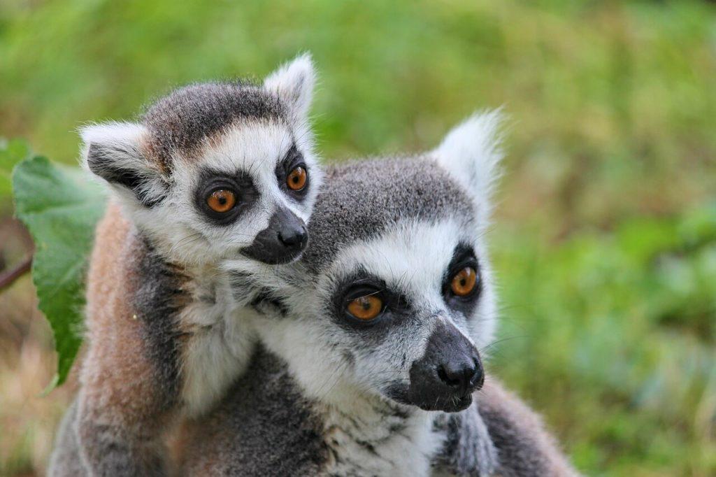Ndasibe and Mantadia National Park - Madagascar Holidays and Travel Guide
