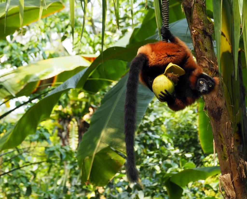 Rainforests of the Atsinanana