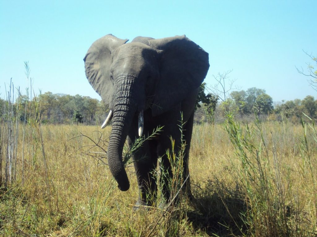 Majete Wildlife Reserve Malawi Holidays and Safari