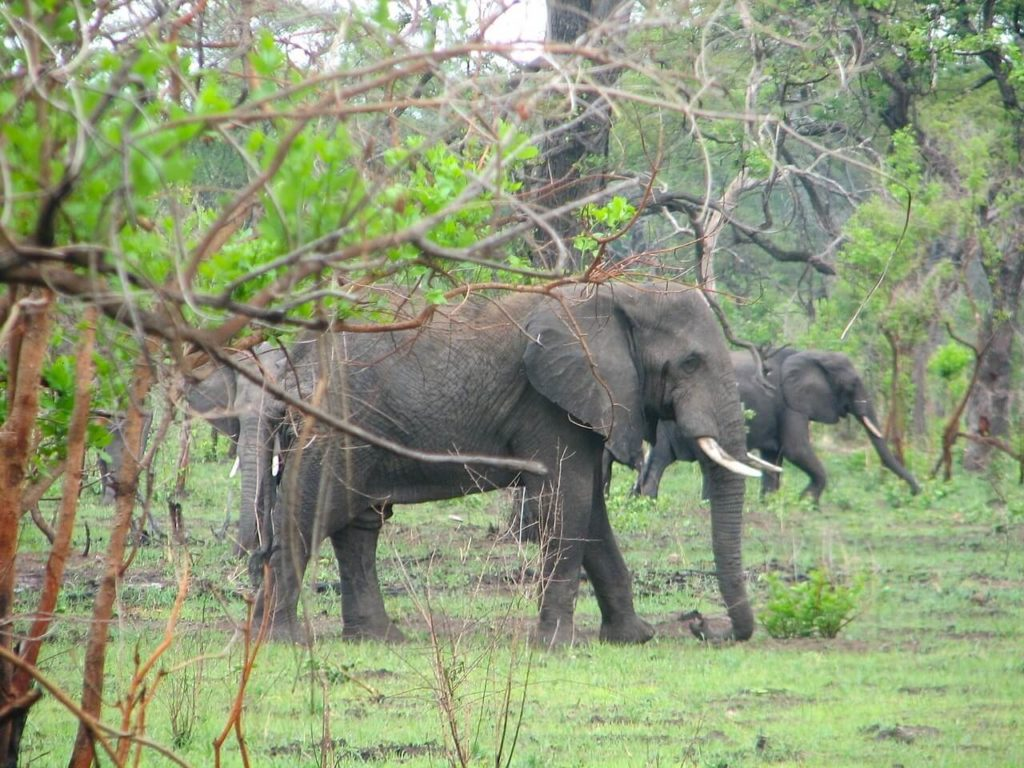 Liwonde National Park - Malawi Holidays and Safari