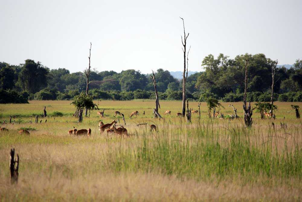 Zambia National Parks