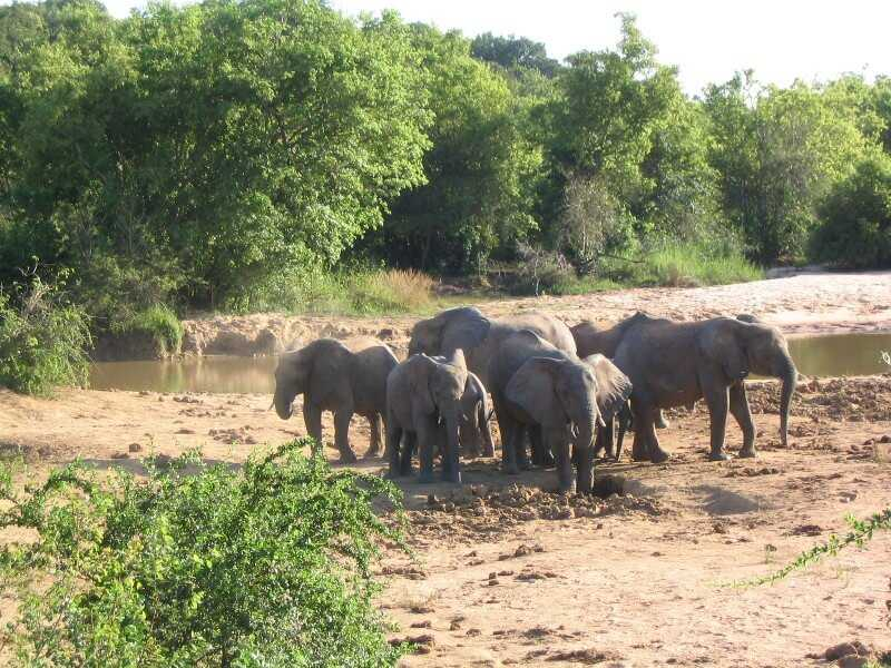Yankari Elephants - Nigeria Holidays and Travel Guide