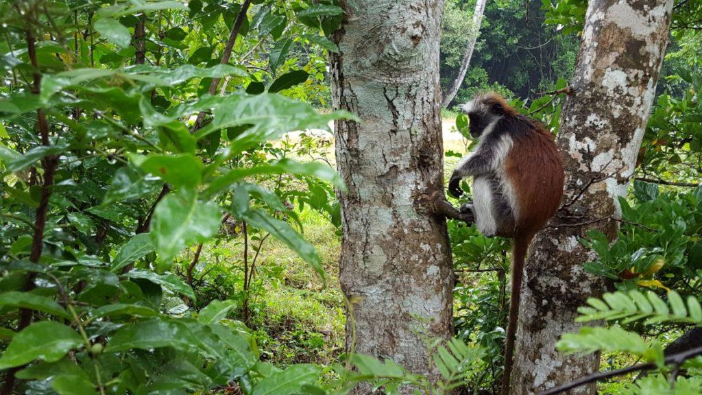 Jozani Forest  - Things to Do in Zanzibar
