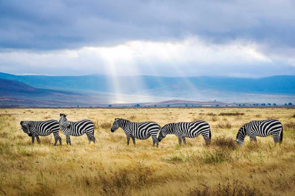Ngorongoro Conservation Area, Tanzania, Holidays in Africa