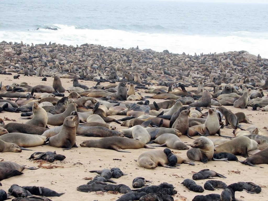 The Cape Cross Seal Colony in Namibia - Holidays in Africa