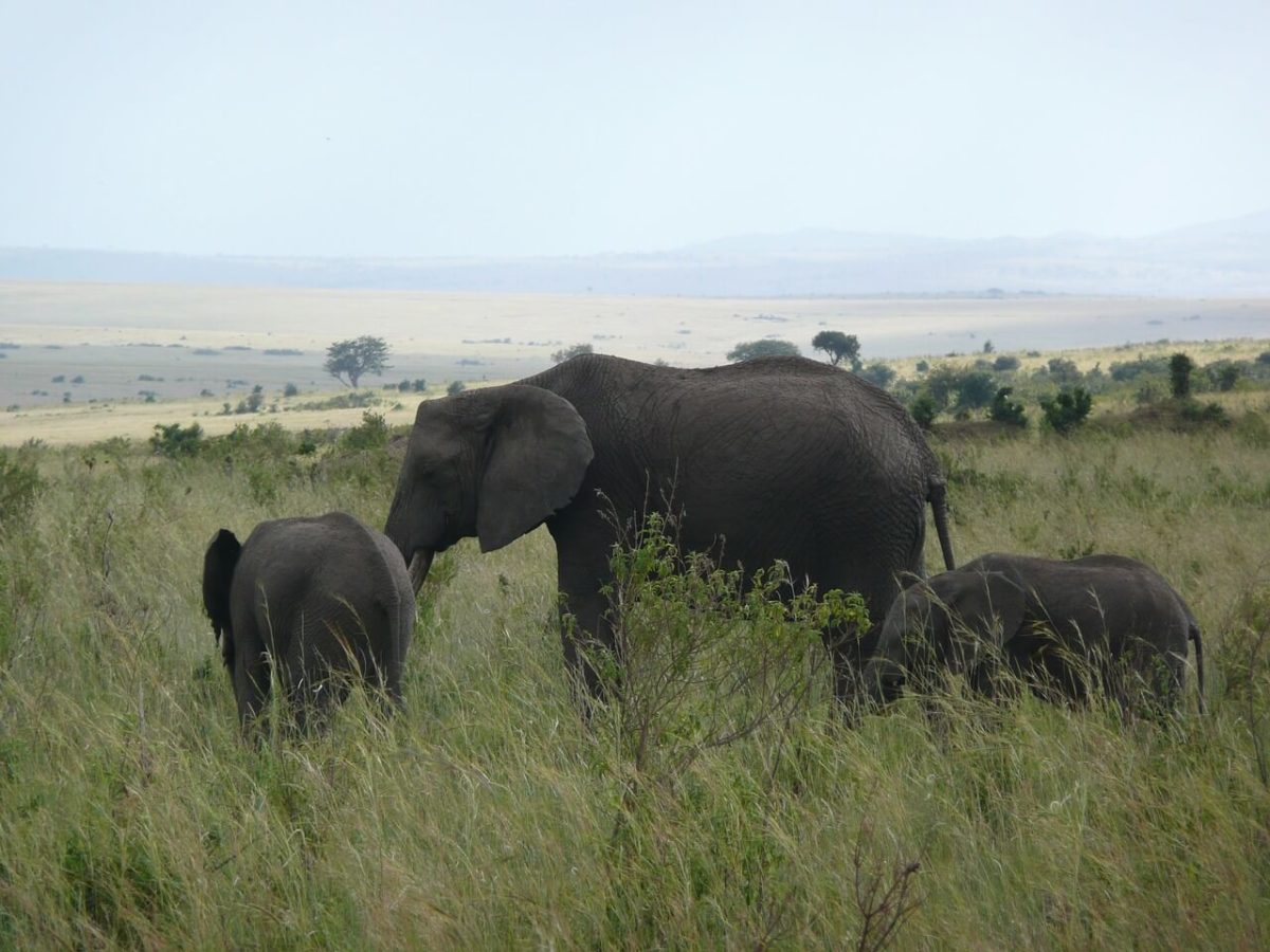 Elephants - Budget Safari in Kenya
