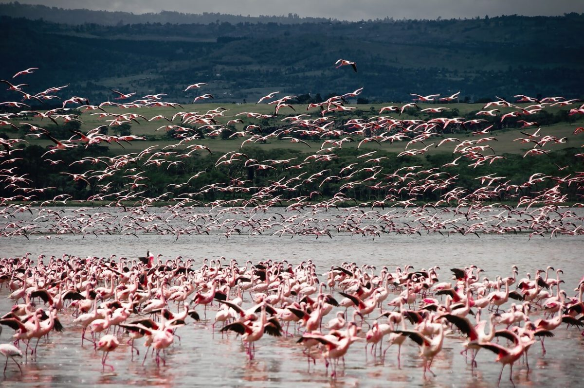 Flamingos - Budget Safari in Kenya