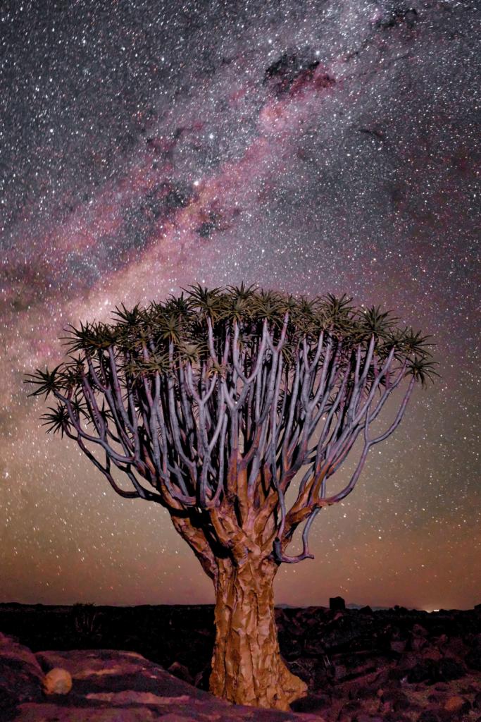 Safari to Namibia - Namib