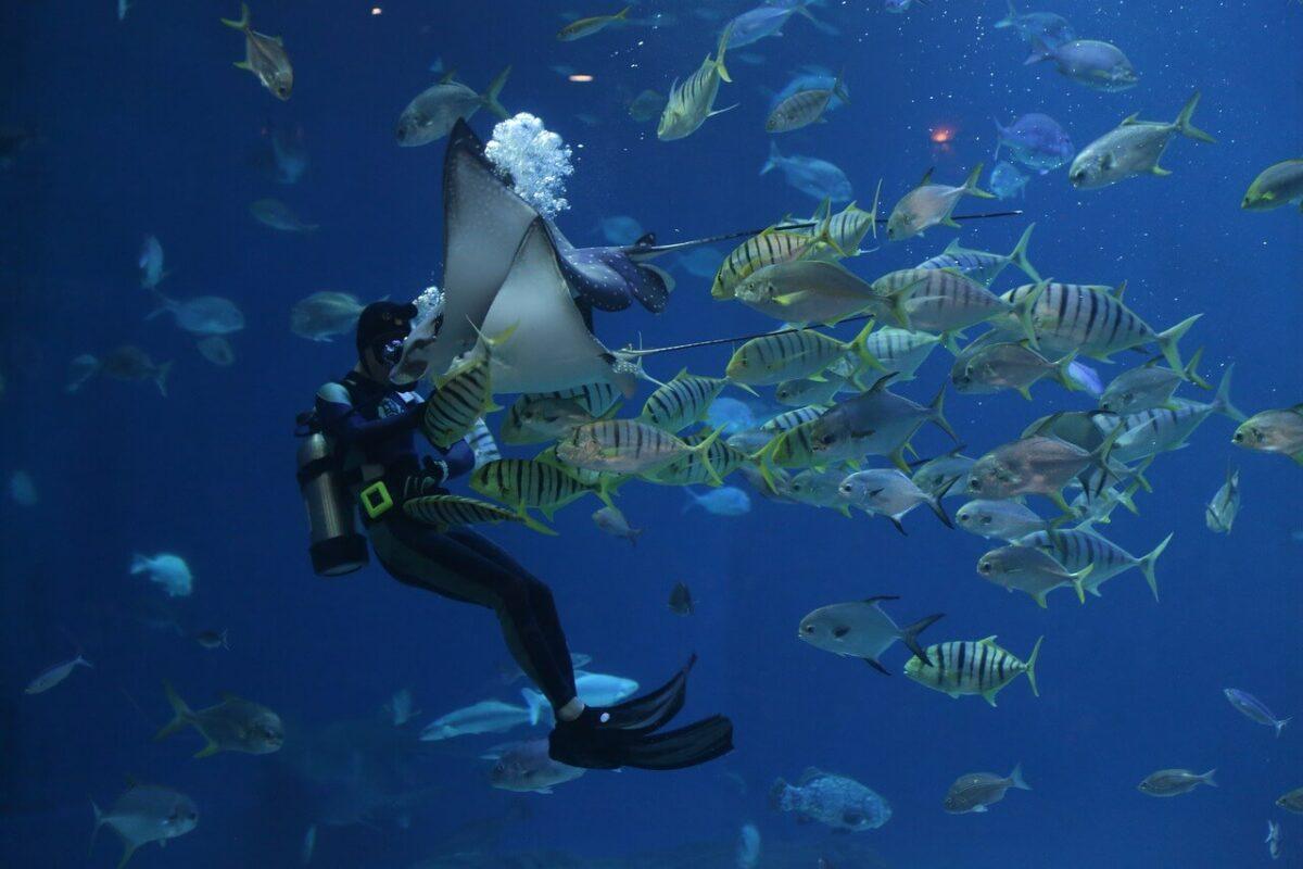 Water activities in Mombasa - Scuba diving